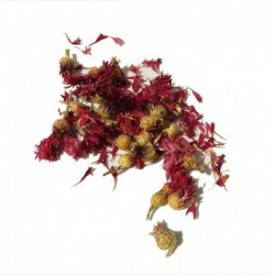 Korenbloem rood A-Kwaliteit