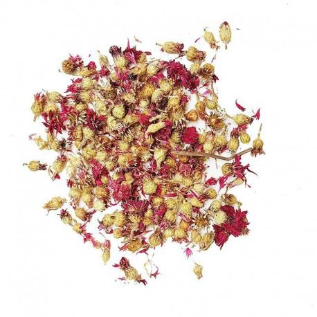 Korenbloem rood B-kwaliteit
