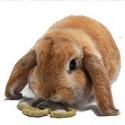 Volwassen konijnenvoer