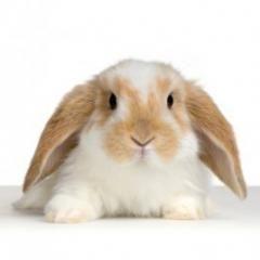 73860-snotneus-bij-konijnen-wat-te-doen.jpg