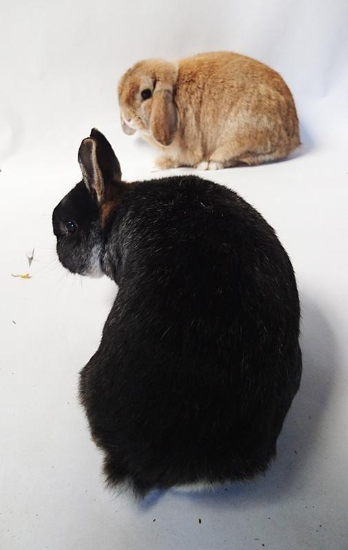 Binky en Joris