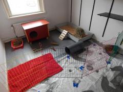 De konijnenkamer