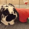 Bobbi Bunny