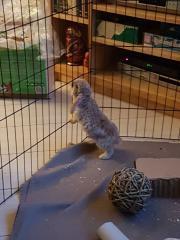 Daisy, mijn geadopteerde paaskonijn