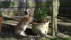 Hannibal stout