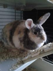 Een paar foto's van mijn 'opvang'- konijntje