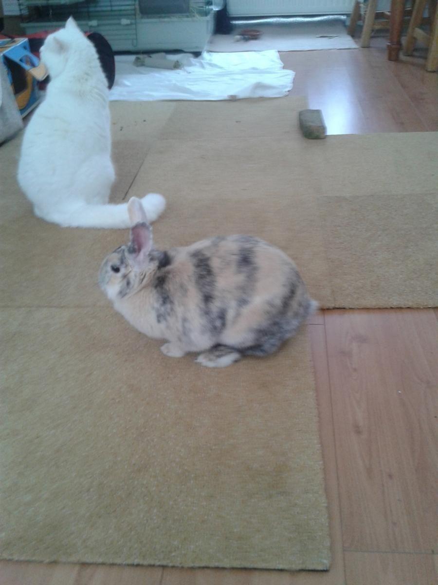 30-4 konijn+katten 030.jpg