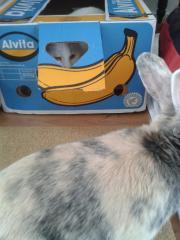30-4 konijn+katten 036.jpg