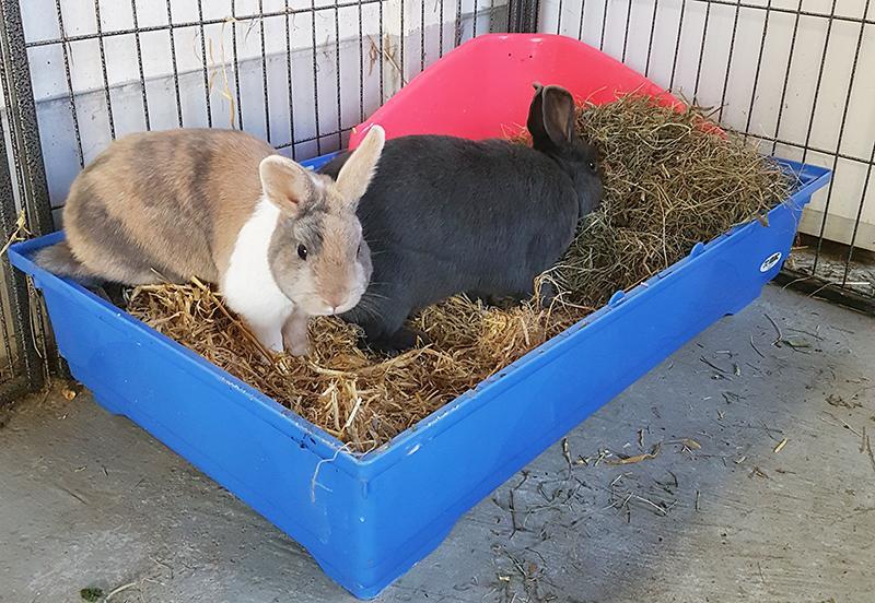 Harold en Charlie