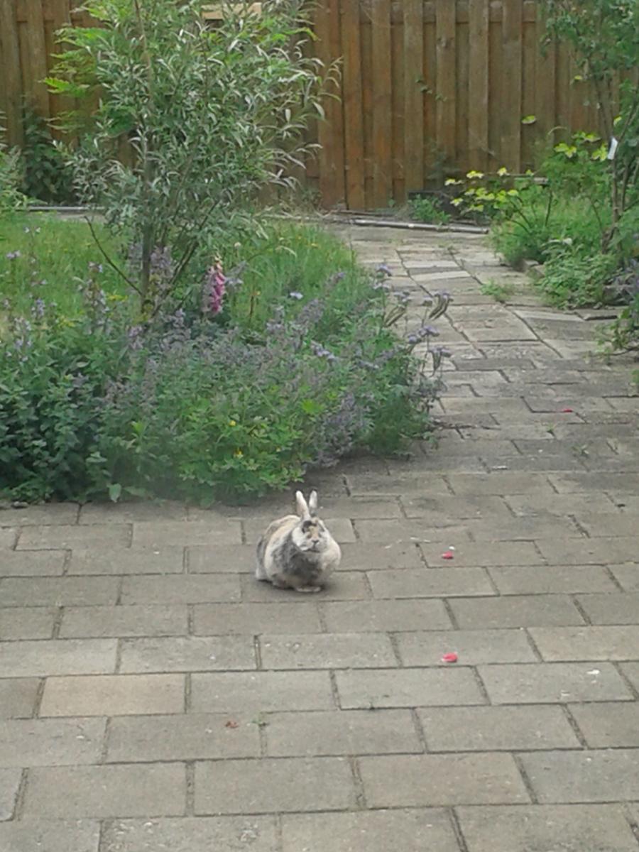 Konijntje in de tuin juni.jpg