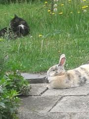 Chillen in de tuin juni.jpg