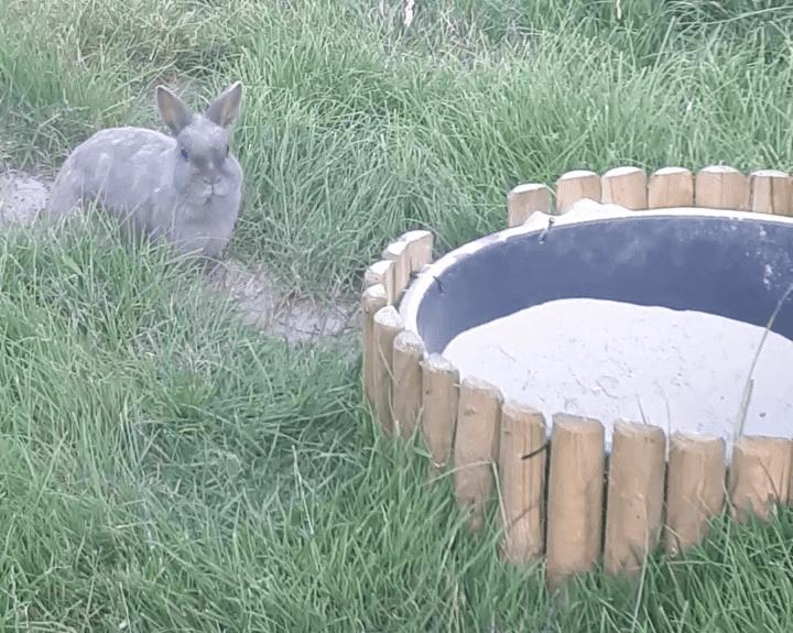 konijn.png