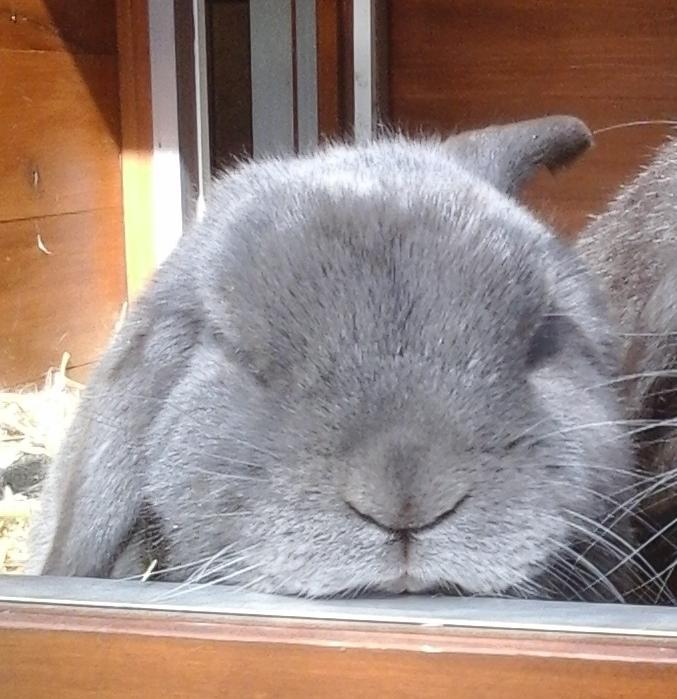 konijnen (2).jpg