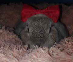 Fotoalbums van de konijnen van leden